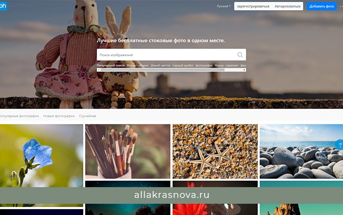 Pxhere — бесплатный фотосток с фотографиями высокого разрешения